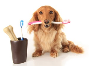 dog-dental